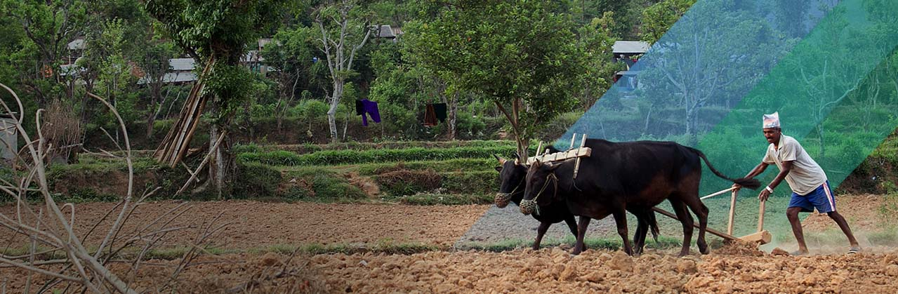 Farmer To Farmer Slide
